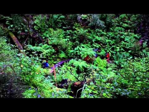lake-waikaremoana-track,-new-zealand